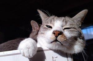 自宅の猫とあご肉(≡・.・≡) 【岩沼 ペットシッター】