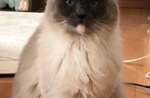 八王子市のペットシッター日記・・・猫のリズちゃんのお世話・・