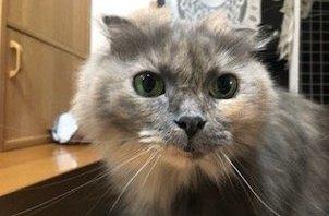 立川市のペットシッター日記・・・猫のはなちゃんのお世話☆
