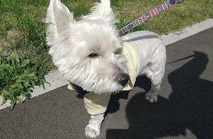 犬のペットシッター日記:リンちゃん<葛飾区奥戸>