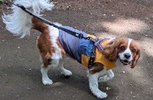 野田市 犬のペットシッター
