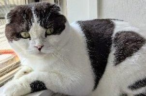 柏市 猫のペットシッター