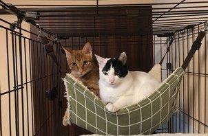 ペットちゃんのご紹介🍀兄弟猫のパインちゃんライムちゃん