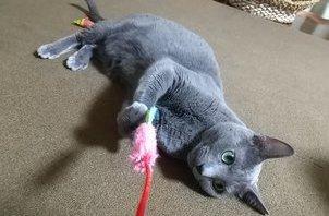 猫のペットシッター日記:こてつ&ももたくん<葛飾区新小岩>